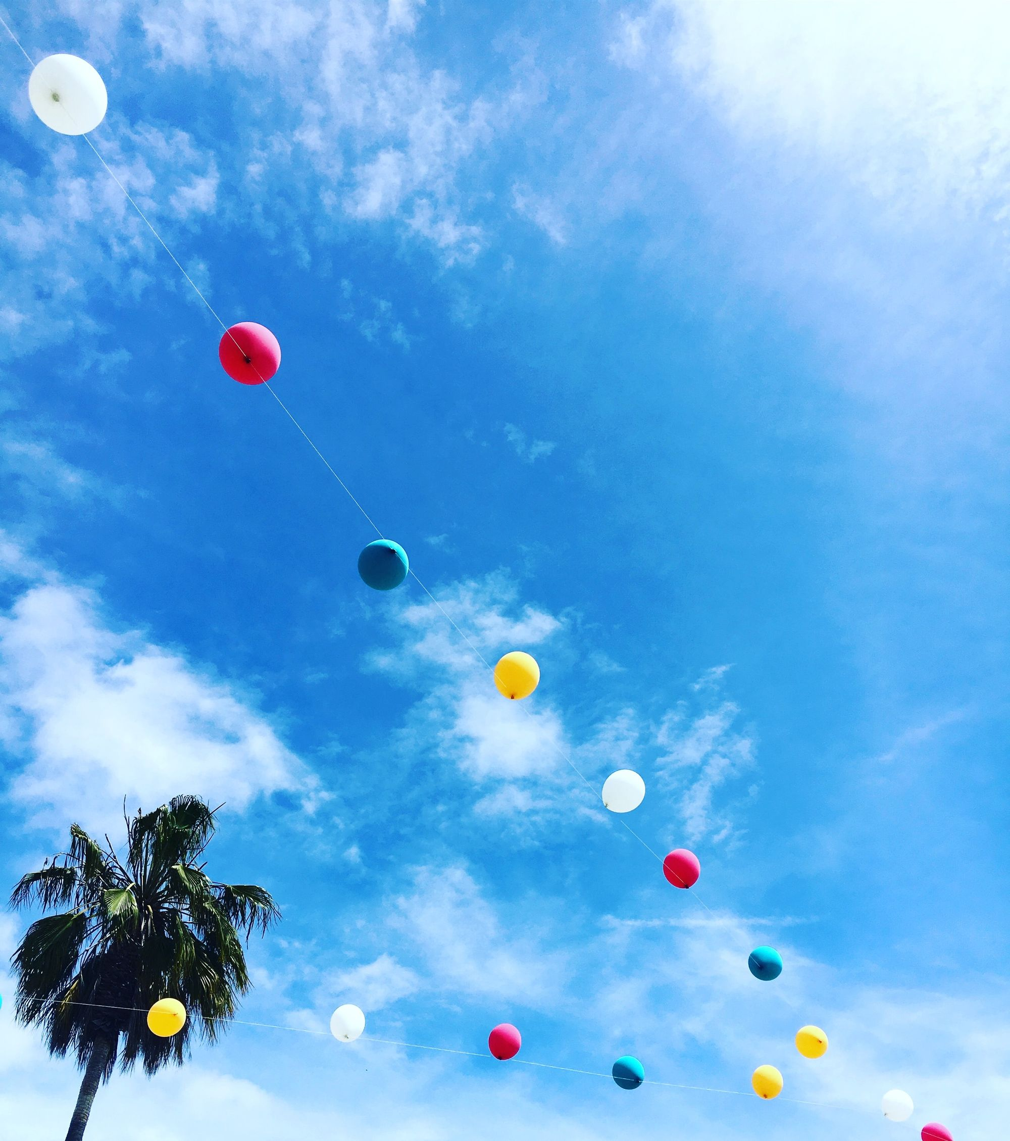 Palm tree and balloons